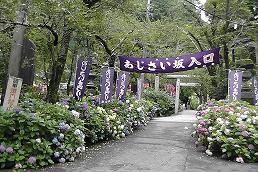 2014-7-totigi7ajisai.jpg