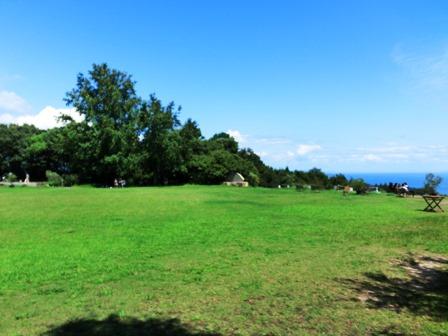 オリーブ園 (4)