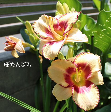 20140701_01.jpg