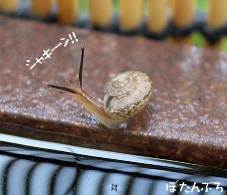 20140708_05.jpg