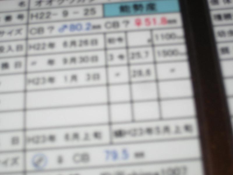 IMG_3785 (800x600)