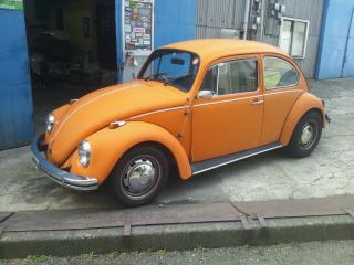 oranng bug