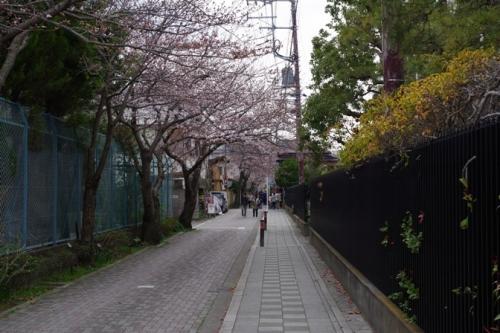 17kamakura2sakura4.jpg