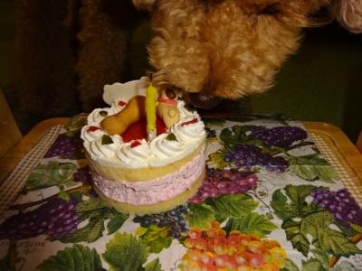 824カカオケーキを食べる1DSC00623