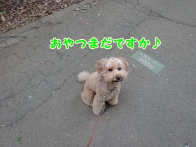 DSC00087_1.jpg