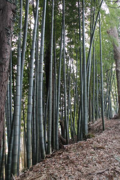 12竹林 のコピー