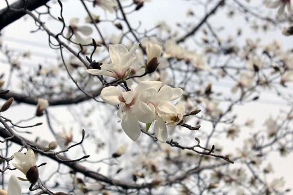 04花 のコピー