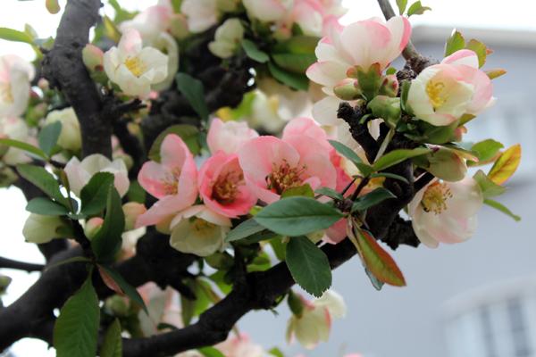 05花 のコピー