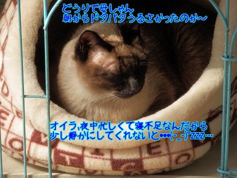 SDwDx3yxIQhmTaG1396577165_1396577452.jpg
