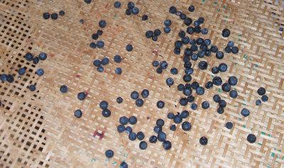 bluebarry12.jpg