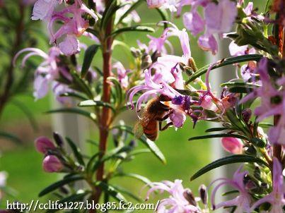ローズマリーとミツバチ