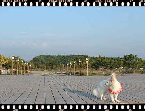 123IMG_4267.jpg