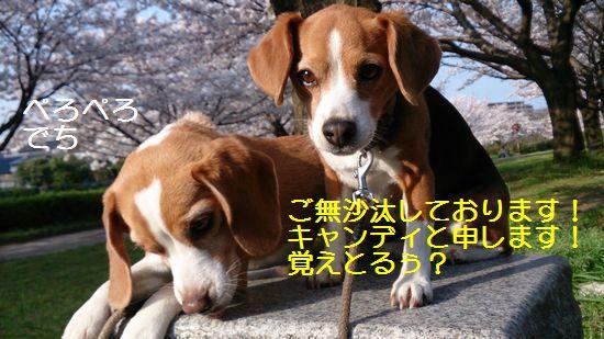 015_20140327200403124.jpg