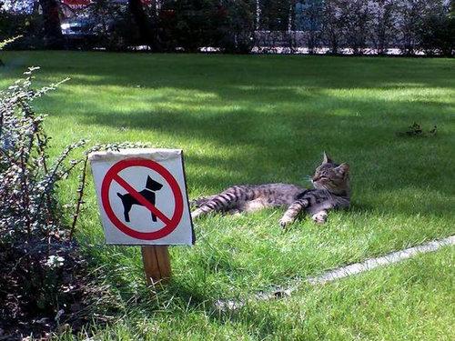 「犬禁止?それはつまり猫天国」と解釈。