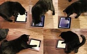 iPadは猫にも操作できるので、いじっている間に自分撮りしてしまった模様