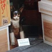 七福猫12