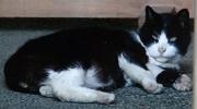 芝大神宮のノラ猫2