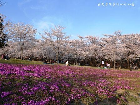 赤城千本桜⑤