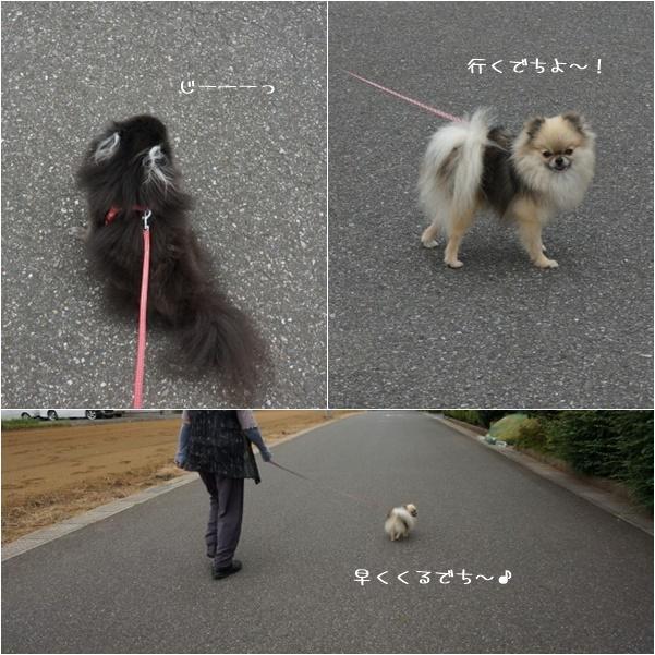 一緒にお散歩1 14-8