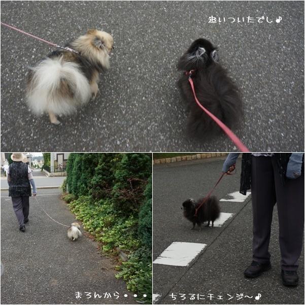 一緒にお散歩2 14-8