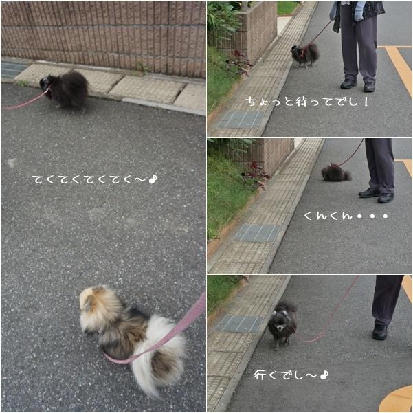 一緒にお散歩3 14-8