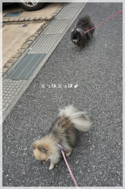 一緒にお散歩4 14^8
