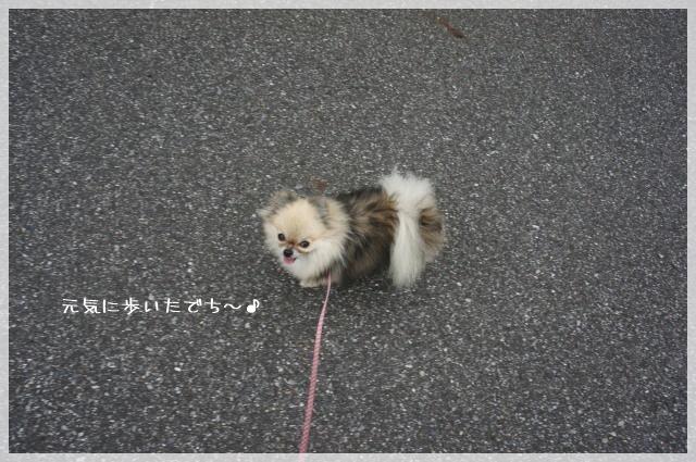 一緒にお散歩5 14-8