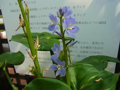 syukusyo-RIMG0265_20140914172409d90.jpg