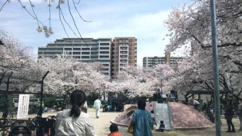 桜公園のにぎわい