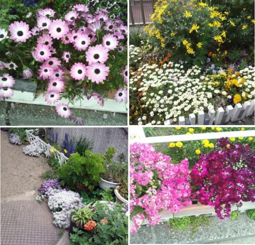 お散歩で見つけたお花たち