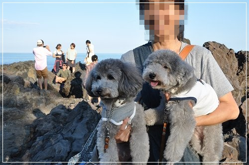 城ケ崎海岸2jpg