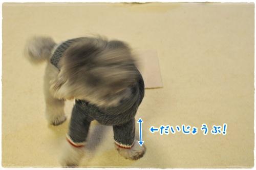 DSC_0221 1