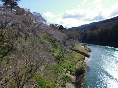 桜淵2014-1