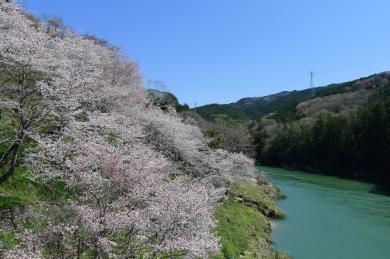 桜淵2014-2