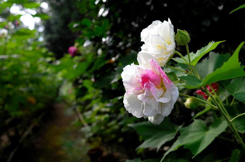 2014Blog4614.jpg