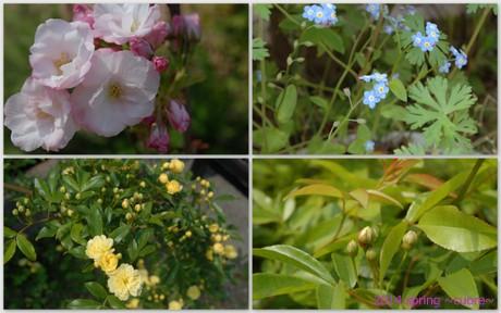 garden 2014spring2