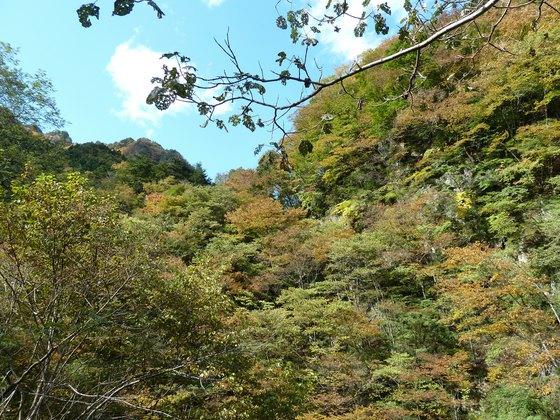 中津峡の紅葉状況(2010/11/3現在)