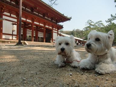 東大寺でまひるちゃんとひかりちゃん