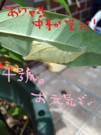 4gou uka1