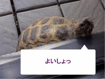 s-マロン20140502