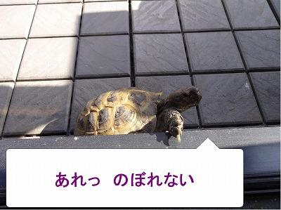 s-マロン20140503