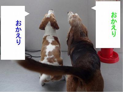 s-レモン次郎20140508