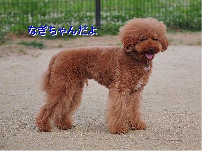 s-なぎちゃん20140609 コピー1