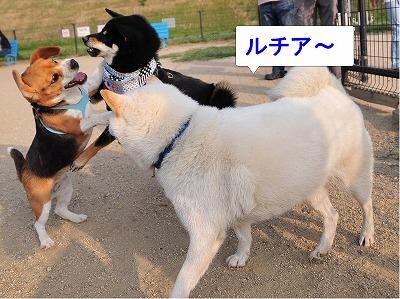 s-ルッチとマロンと太郎11