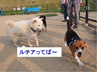 s-ルッチとマロンと太郎12