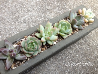 横並び寄せ植え-2 201403