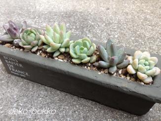 長方形鉢 寄せ植え-2 201403