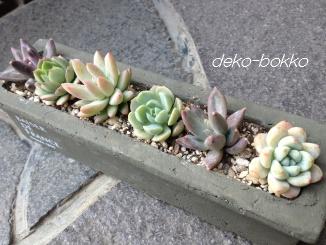 寄せ植え ロング鉢 201403