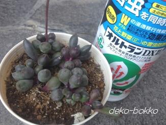紫麗玉 オルトランDX