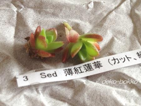 薄紅蓮華 201405